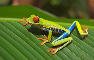 green frog with blue and yellow